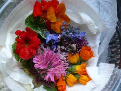Kräuter & Essbare Blüten